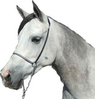 Show Halter - Braid trim nose - silver