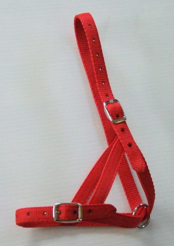 Halter - Yearling Tethering
