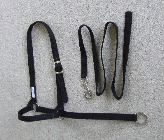 Halter - Show Set - Nickel Fittings