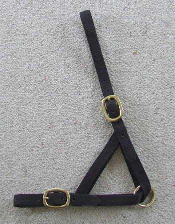 Halter - Yearling Tethering  - Brass Fittings