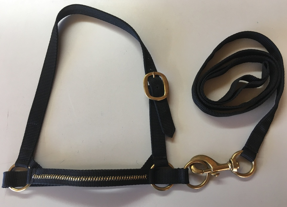 Halter - Show Set -  with Gold Braided Noseband